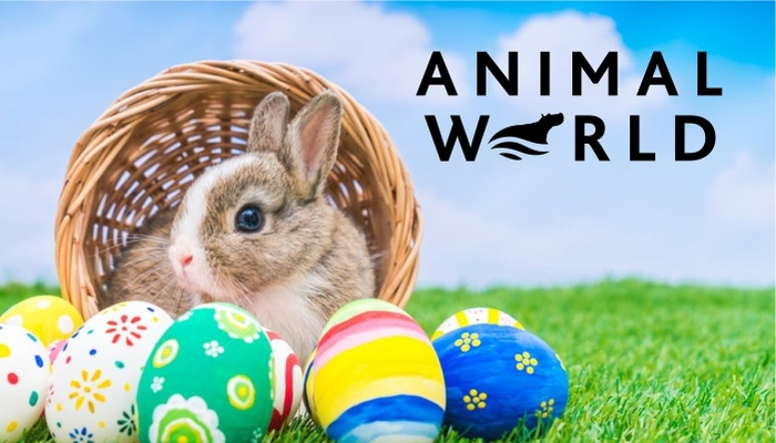 Easter Night Walk @ Animal World