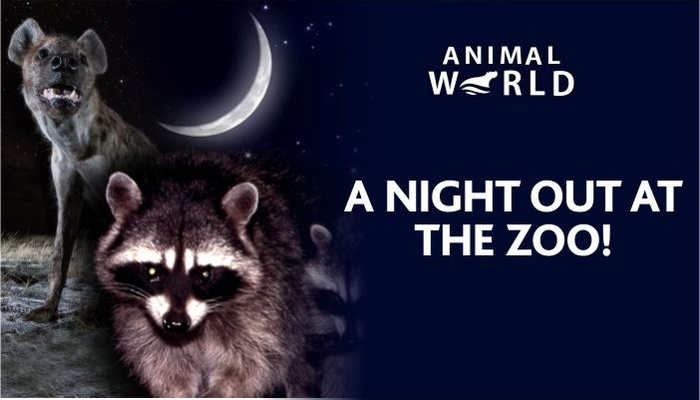 A Night Out At The Zoo